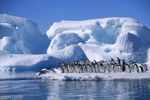 «Уникальная Антарктида»