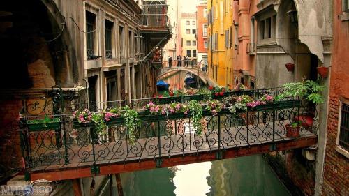 «Как живётся в Венеции»
